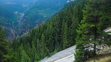 An Eroded Ridge Full Of Grit On An Inclined Mountain Side On Which A Coniferous Forest Has Grown. Capatanii Mountains, Carpathia, Romania.