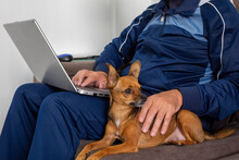 Working From Home, Man Sitting On Sofa With Computer On Lap And Dog Beside