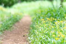 新緑と黄色い花の小道