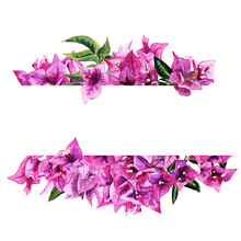 Frame With Watercolor Bougainvillea Flowers Isolated On White Background