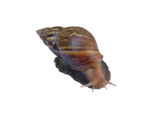 A Separate Snail On A White Background