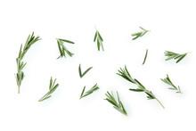 Fresh Rosemary Leaves Isolated On White Background