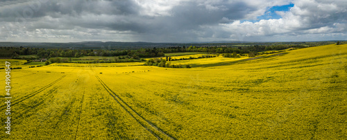 Canvastavla The drone aerial view of rapeseed yellow fields on the hillside in spring with clouds sky, Guilford, England