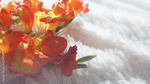 Cuadros en Lienzo beautiful bouquet of red and yellow gladioli flowers on a light fluffy white bedspread
