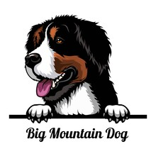 Big Mountain Dog - Dog Breed. Color Image Of A Dogs Head Isolated On A White Background