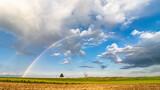 Fototapeta Rainbow - Tęcza nad polami z drzewem