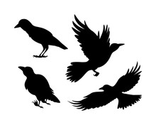 Cartoon Set Of Black Halloween Holiday Silhouette Elements Of Crows On White Background