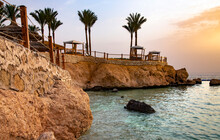 Rocky Steep Coast With Palm Trees Near The Red Sea In Sharm El Sheikh At Sunrise. Travel Concept.