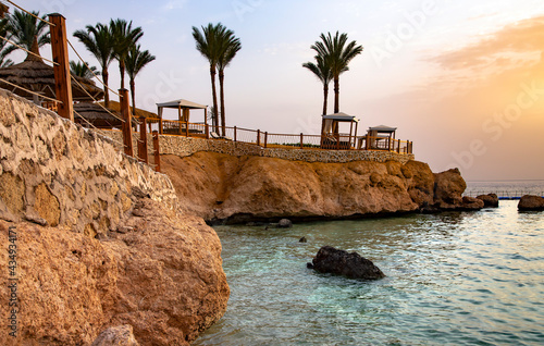 Photo Rocky steep coast with palm trees near the Red Sea in Sharm el Sheikh at sunrise