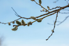 Buds On A Branch