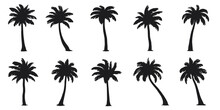 Various Coconut Palm Silhouettes On The White Background