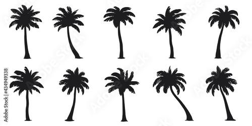 Fototapeta various coconut palm silhouettes on the white background