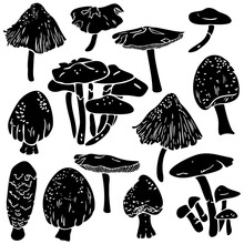 Vector Collection Of Different Mushrooms Silhouettes. Mycology Fungus Design.