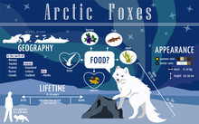 Ready To Use Educational Poster About Arctic Foxes. Infographics For Print In A Children's Encyclopedia About Polar Animals, Their Lives, Prevalence And Diet. Page From The Textbook On Biology