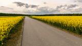 Fototapeta Krajobraz - droga przez kwitnące pola rzepaku