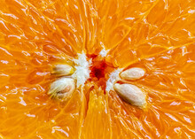 Pulp Of Orange Fruit In Detail. Macro Photograph Of The Pulp Of An Orange With A Detail Of Gummy Candy And Seeds.Pulp Of Orange Fruit In Detail. Macro Photograph Of The Pulp Of An Orange With A Detail