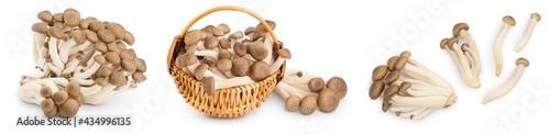 Photo Brown beech mushrooms or Shimeji mushroom isolated on white background