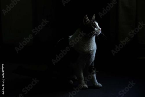 Obraz na plátně gato en  la luz