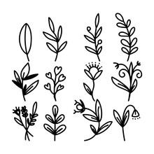 Hand Painted Flowers And Leaves Vector Isolated On White Background , Vector Illustration EPS 10