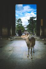 Deer At Nara Japan