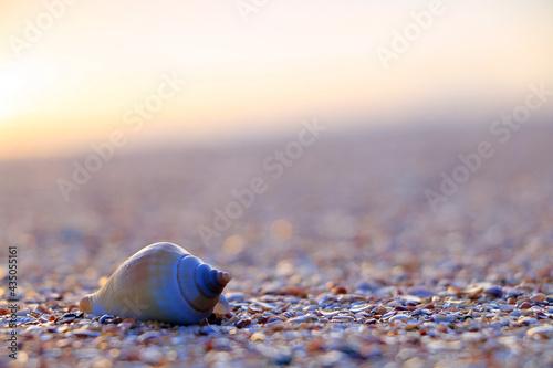 A seashell on the beach during sunset. Fototapet
