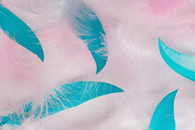 Pink And Blue Feathers Macro Blurred Background