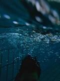 Fototapeta Fototapety do łazienki - Zanurzenie na basenie