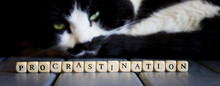 The Word Procrastination Next To A Dozing Cute Cat. Educational Concept Of A Term From Psychology And Psychotherapy. Web Banner