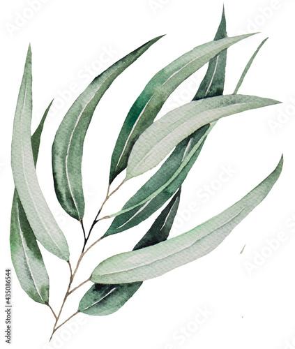 Fotografiet Watercolor eucaliptus leaves on branch illustration