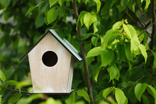 Wooden Bird House On Tree Branch Outdoors. Space For Text
