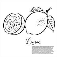 Fruit, Lemon Vector Line Art Illustration