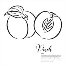 Fruit, Peach Vector Line Art Illustration