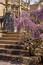 English Garden With Flowering Wisteria On Stone Wall