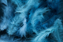 Feathers Of Delicate Blue Shades. Background, Texture. Abstract And Stylish Background. Smooth Lines And Texture Of Feather, Down