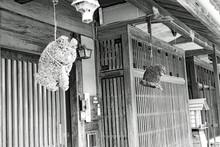 宿場町風景 枚方宿 玄関前の吊り下げたフクロウ
