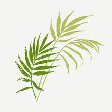 Palm Leaves. Green Silhouette Of Plant Branches With Texture. Vector Illustration Isolated On White Background.