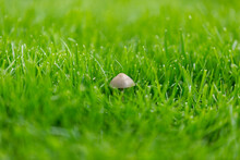 Little Mushroom Sitting In The Middle Of The Lawn With Little Depth Of Field