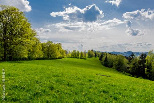 Fotografía Springlike awakening along the Rennsteig in the most beautiful sunshine
