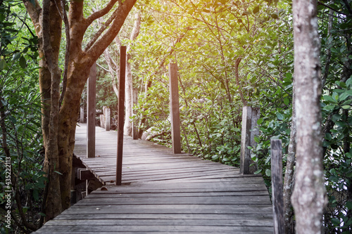 Fototapeta Tropical forest exotic walkway on wooden bridge in forest jungle of mangrove tre