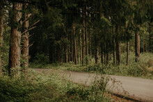The Road In The Pine Forest.