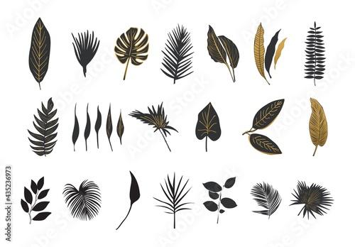 Obraz na plátne Botanical wall art element vector collection