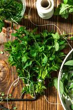 Bunch Of Fresh Oregano Or Origanum Herb Preparation For Drying