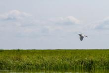 Bird Flying Over Marsh