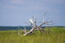 Bird On Tree In Marsh