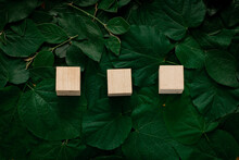 Wooden Cubes On A Background Of Green Foliage. High Quality Photo