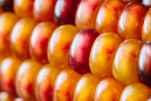 Closeup Of Colored Corn