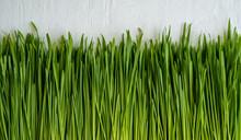 Wheatgrass On White Background