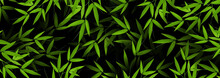 Fresh Green Bamboo Stems And Leaves Background. Exotic Botanical Design For Banner Cosmetics Spa Perfume Health Care Products Aroma.