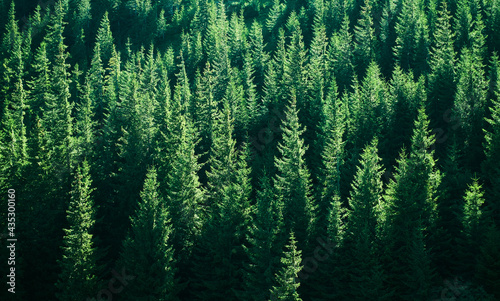 Cuadros en Lienzo Mountains with forests. Carpathian Mountains