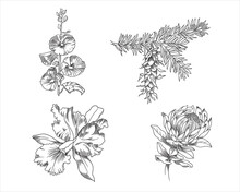 Vector Illustration Of Orchid, Douglas Fir, Protea And Hollyhock Flower
